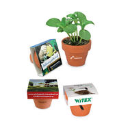 Logo Plant Pot made of Terracotta with individual cover